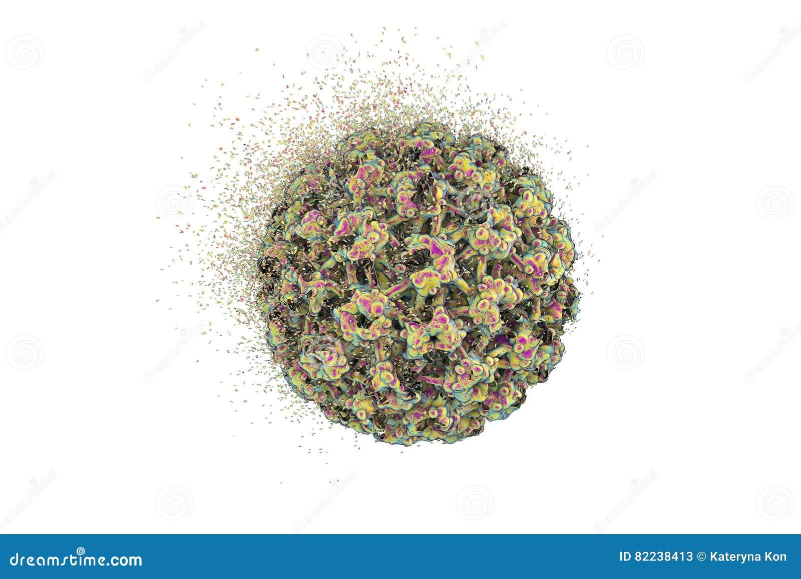 papilomavirus umano