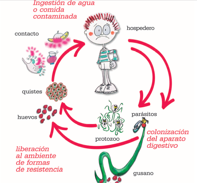 intraductal papillomas removal papiloma virus en hombres