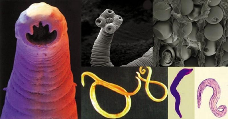 #paraziti - Hash Tags - Deskgram