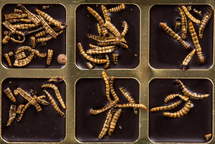 paraziti intestinali fara simptome