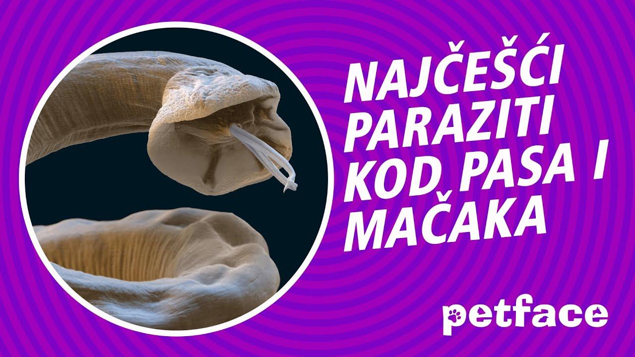 Paraziti s soda paraziti