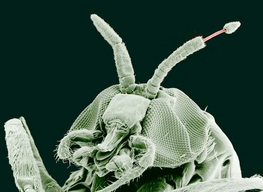 paraziti organisms)