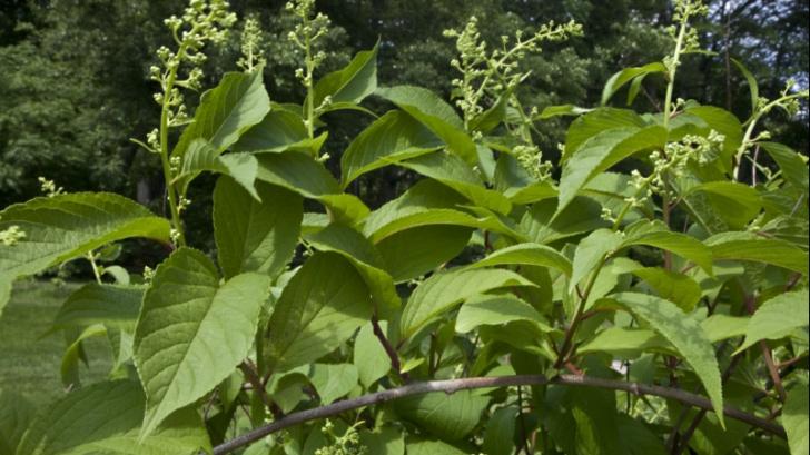 plante care vindeca cancerul cancer cerebral tratamiento natural