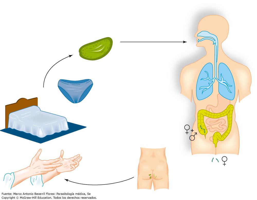 prevencion de enterobiasis