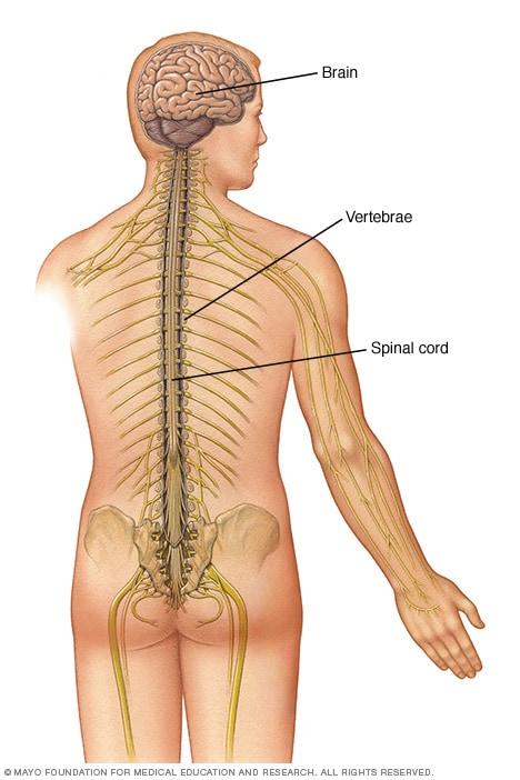 sarcoma cancer near spine hpv impfung schweiz