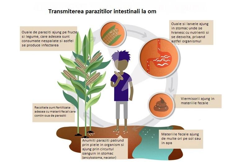 tratament paraziti secom cancer bacterian copaci
