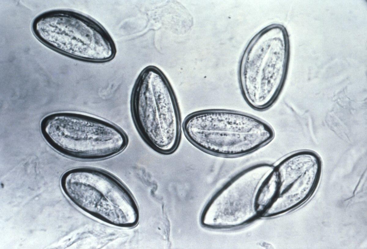 parazity v tele liecba