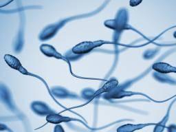 testicular cancer yellow sperm