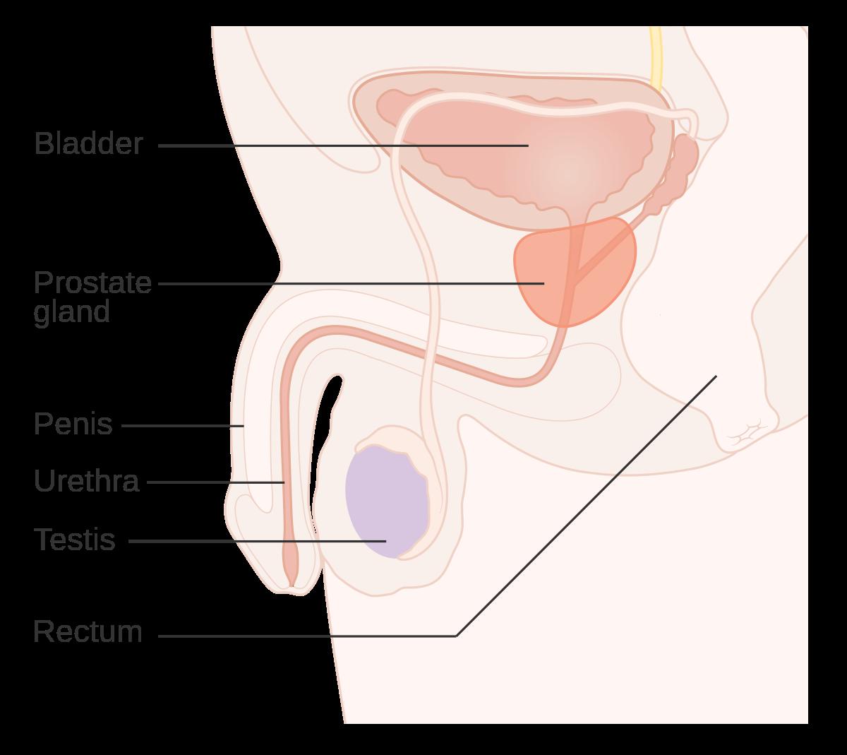 benign cancer in urdu papillomatosis during pregnancy
