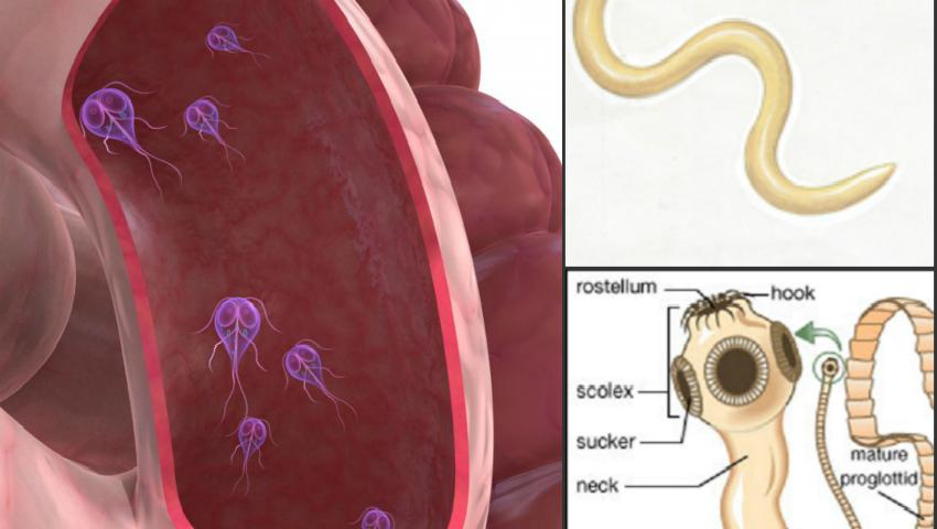 ce analize se fac pentru paraziti intestinali