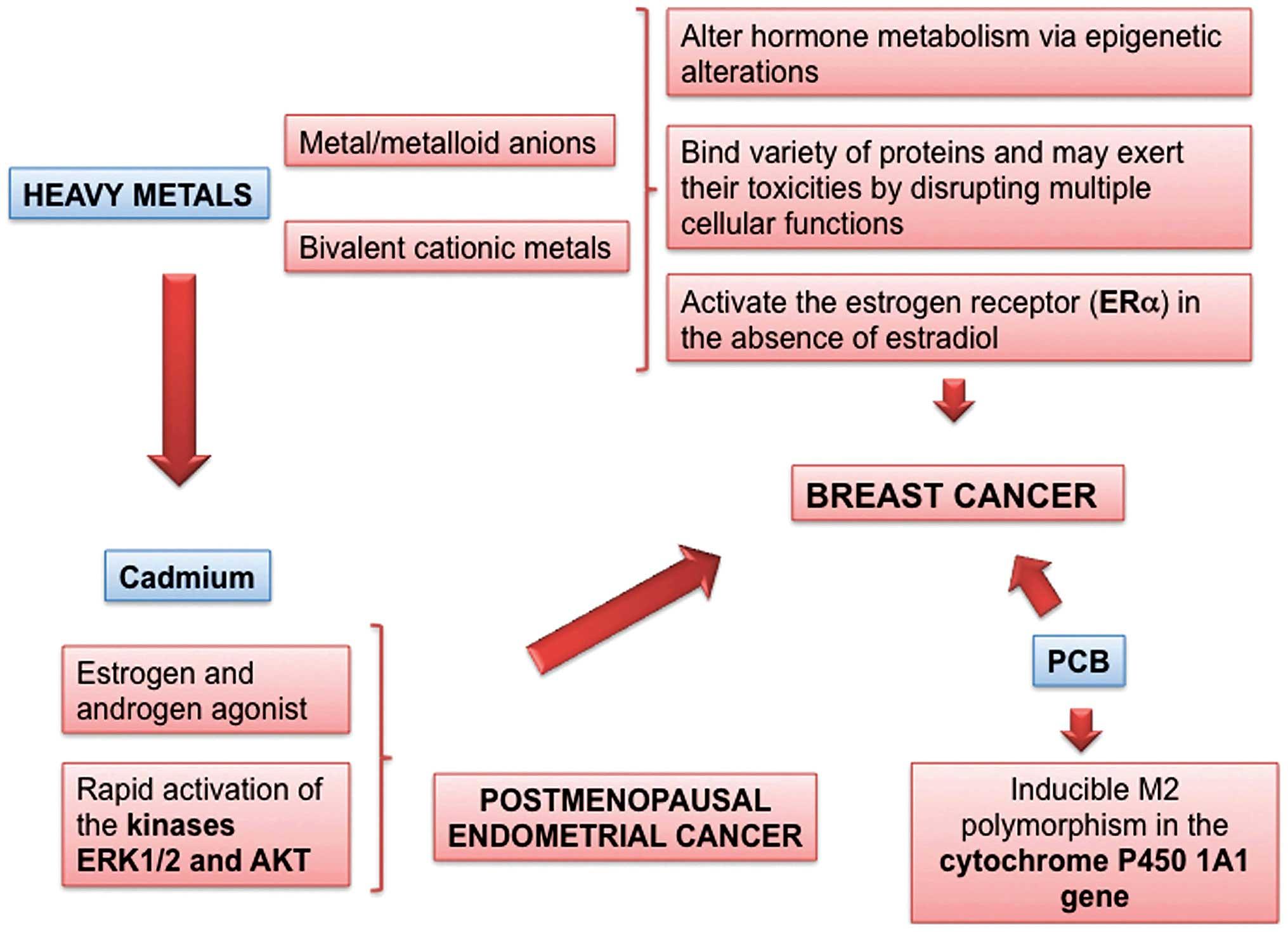 Impactul metforminului în tratamentul şi evoluţia pacienţilor oncologici cu diabet zaharat de tip 2