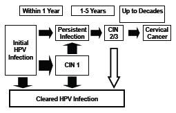 hpv genital herpes hpv cancer cervical