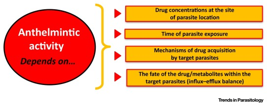 anthelmintic drugs pharmacodynamics)