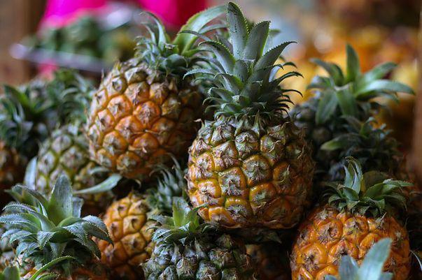 ananas flatulenta)