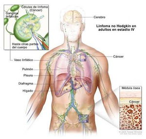 papillomavirus pour lhomme