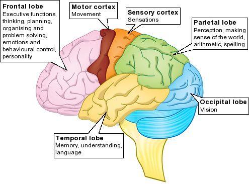 cancer amigdala cerebral