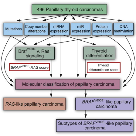 papillary thyroid cancer ppt)