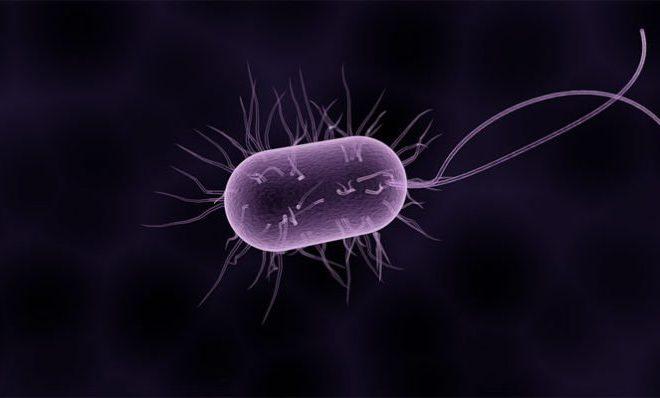 kako prepoznati parazite u tijelu