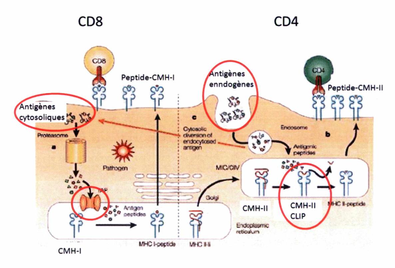 cancer colorectal vessie)