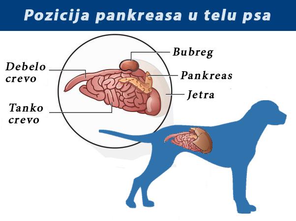srcani paraziti kod pasa