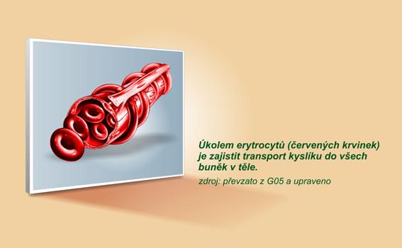 anemie zelezo)