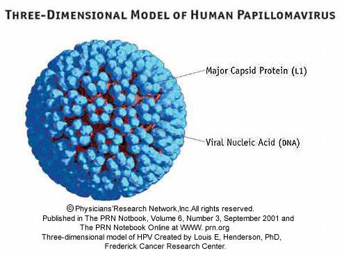 hpv papillomavirus virus oxiuri la bebelusi
