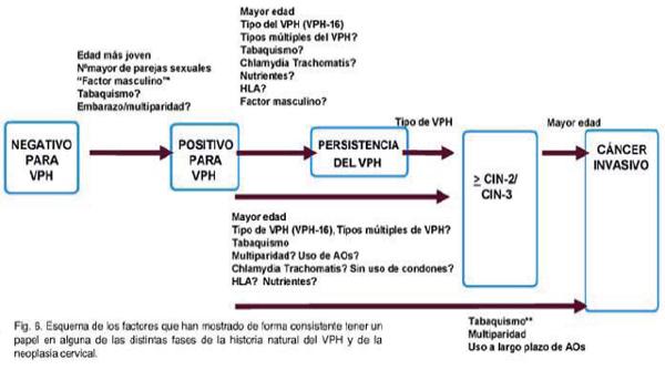 virus del papiloma humano en que tiempo se desarrolla)