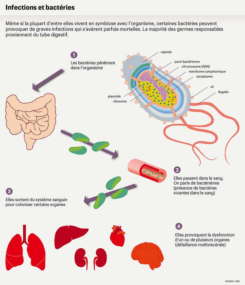 bacterie qui attaque le foie