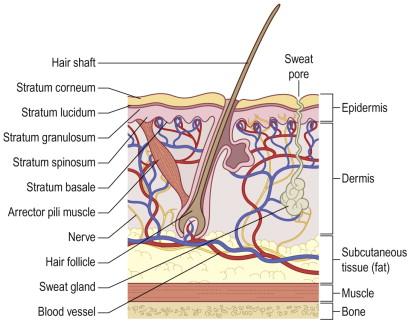 foot wart diagram
