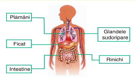 detoxifierea ficatului si colonului)