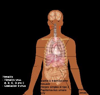 infezione virale papilloma virus)