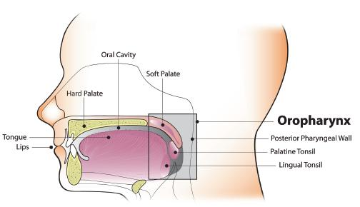 hpv throat and mouth cancer)