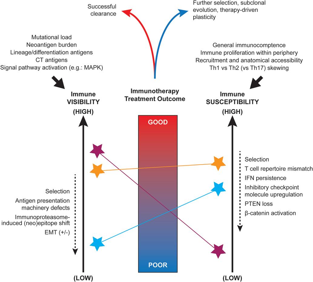 cancer intestin gros evolutie