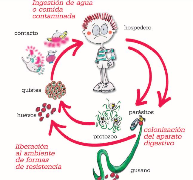 parasitos oxiuros contagio