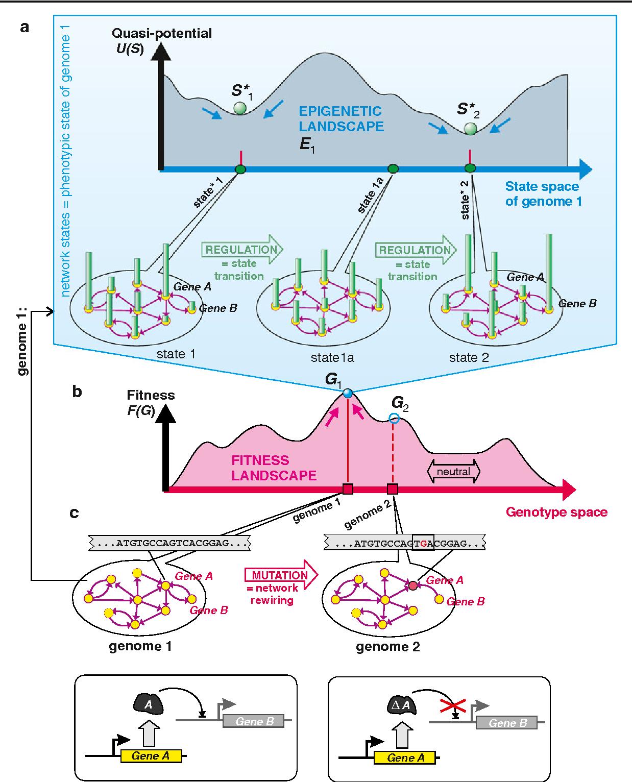 genetic cancer landscape)