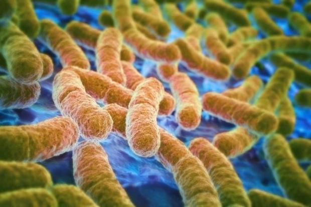 bacterii multirezistente