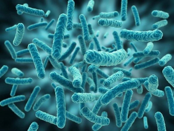 bacterii regnul monera)