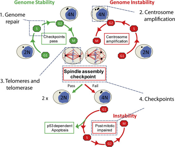 cancer genetic instability)