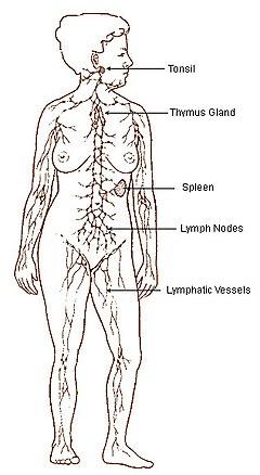cancer limfatic metastaza)