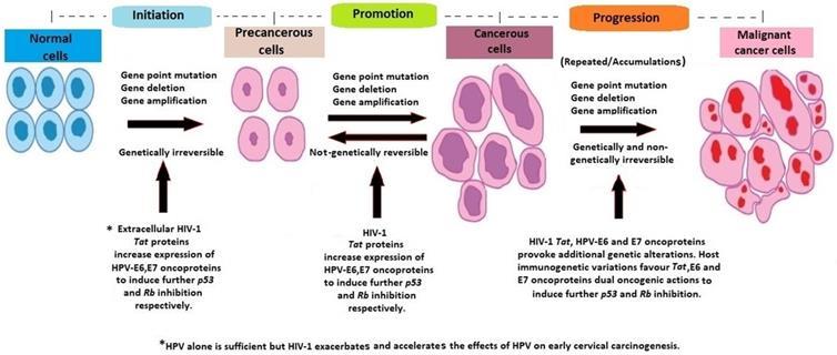 hpv develop into cervical cancer)