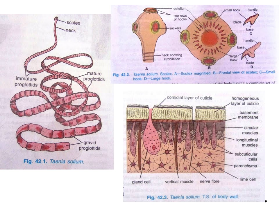 Lucrari Stiintifice : Zootehnie si Biotehnologii