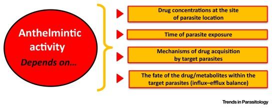 paraziti intestinali ascarizi hpv na lingua como curar