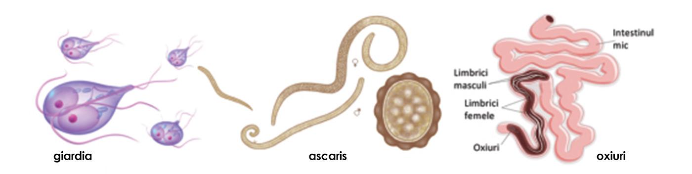 paraziti la copii mici)