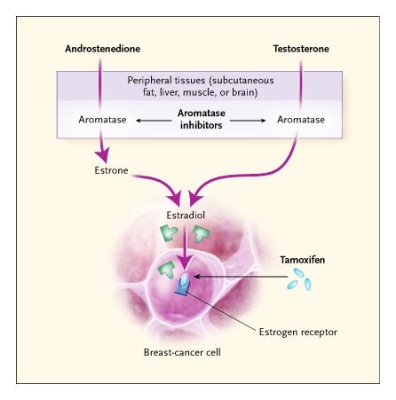 uterine cancer tamoxifen)